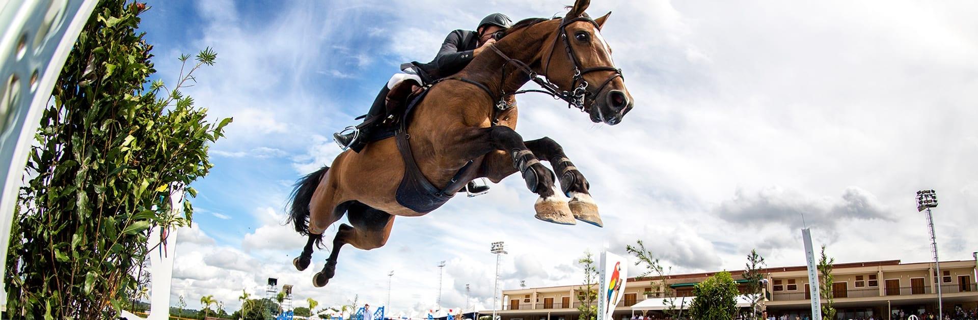 wellington florida horse