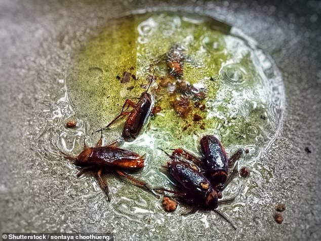 roaches in bbq grill
